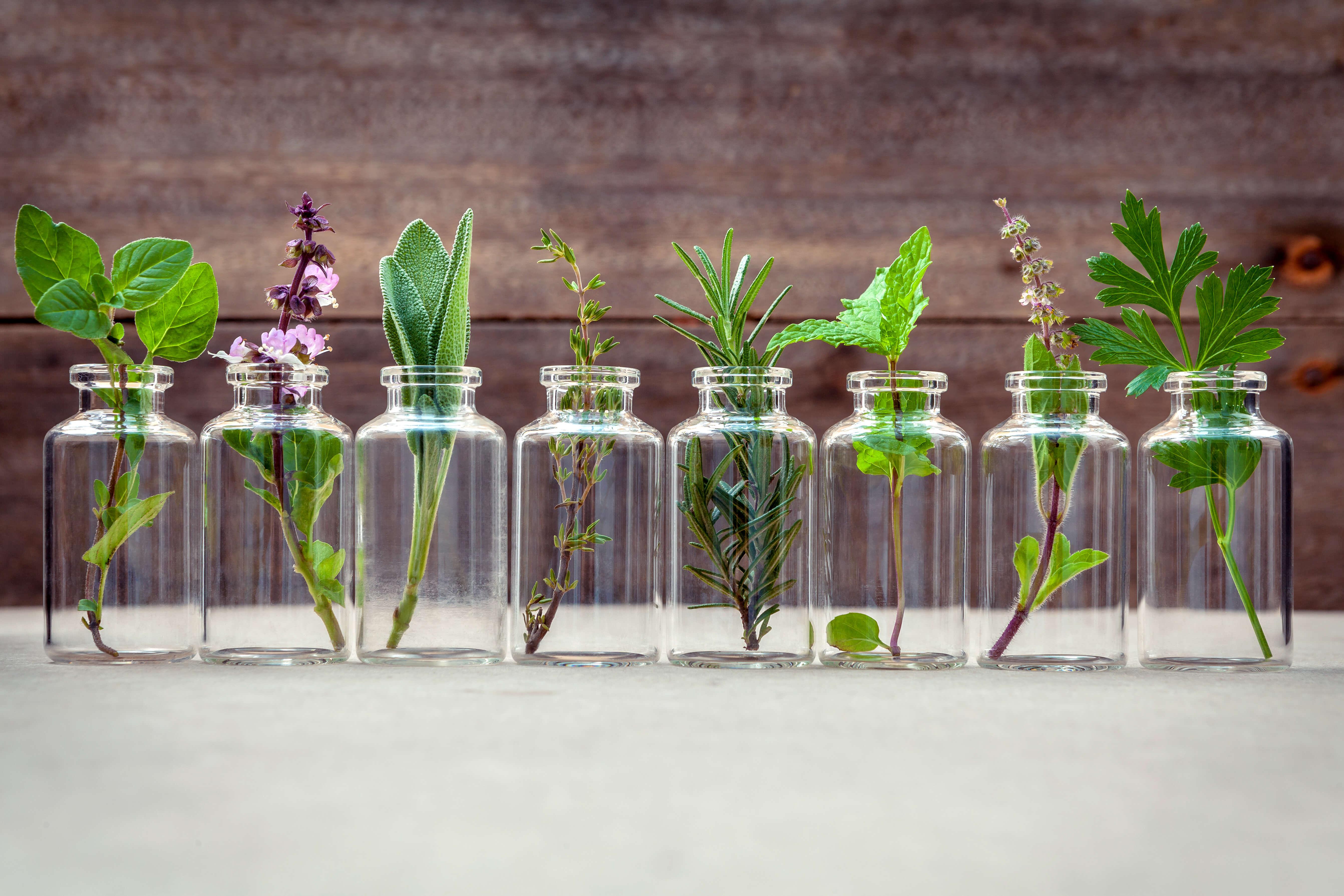 Lipid Pneumonia and Essential Oils? Should I be Concerned?