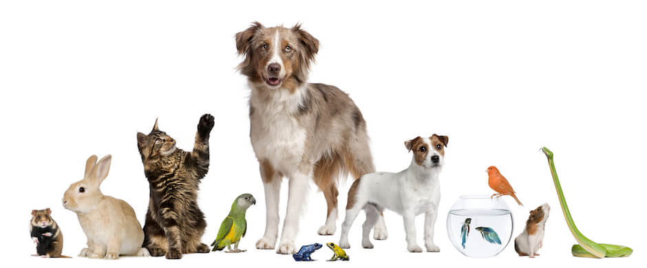 Animals and Essential Oils: The Basics