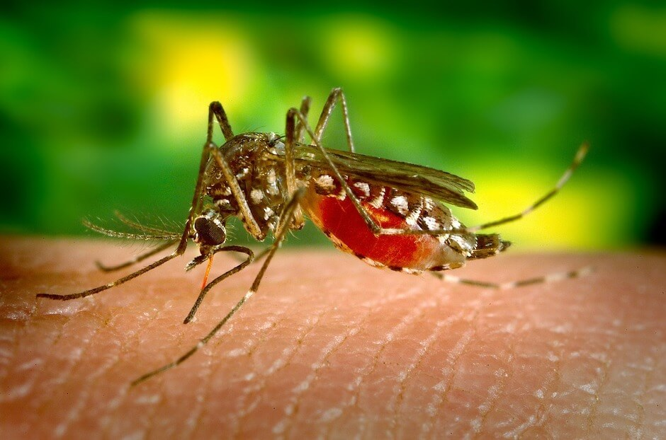 Mosquitoes: What you need to know to protect yourself